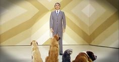 I bet you didn't know that funny man Steve Martin once did comedy for dogs. Seriously! This hilarious throwback video had me rolling! Oh my stars, those dogs' faces were so funny!