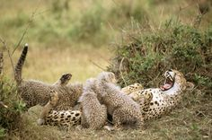 Tästä ei iloa puutu – 16 nauravaa eläintä | Vivas