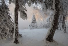 Find images and videos about nature, winter and snow on We Heart It - the app to get lost in what you love.