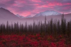 Brooks Range mountains,North of Coldfoot, Alaska. The last gasp of  Autumn by Ania Photography