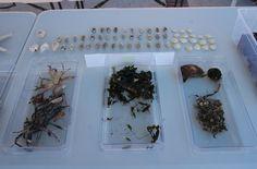 Algas en la Feria de la Pobla de Farnals