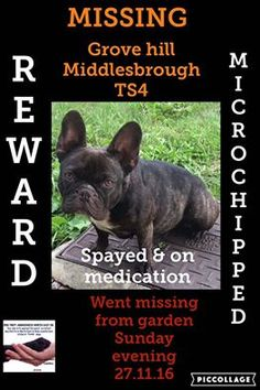 Missing: Grove Hill, Middlesbrough Please can you help get my girl home, she has gone missing from my garden yesterday evening.She is Microchipped. She has a skin condition that has to be treated. She is no good for breeding to anyone, she is just part of our family so please share and bring her homeRead More