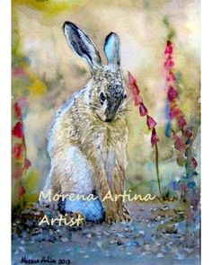 Shy Hare Canvas Print 15 x 11 inches