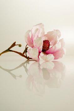 Magnolia - Cake by Svetlana Petrova
