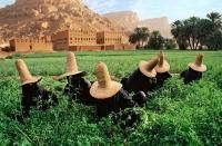 CLOVER GATHERERS IN WADI HADRAMAWT, NEAR SHIBAM, YEMEN, 1999 by STEVE MCCURRY (Born 1950) - photograph for sale from Beetles & Huxley