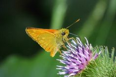 Schmetterling 10