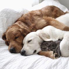 """awwww-cute: """" The Modern Family (Source: http://ift.tt/1VDANtl) """""""