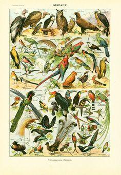 aves de 1930 d identificación marca Larousse de