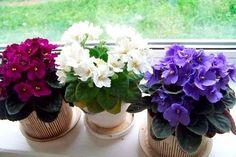 Little Flowers, Purple Flowers, Spring Flowers, Indoor Garden, Indoor Plants, Landscape Design, Garden Design, Valley Flowers, Saintpaulia