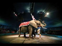 Nosey The Elephant Gets Her Happy Ending: Freedom | A judge has ruled that after 32 years as a mistreated performing elephant, Nosey doesn't have to go back to her horrible owners at the Great American Family Circus. She will be able to live out her life at a sanctuary. | Care2 Causes