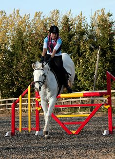 ShowJumping at ridning school     Comfort is  a super showjumping horse. Search all things dresage: http://www.galloperz.com/store