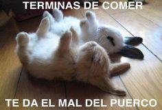 #conejos #mal del #puerco #monchis