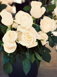 Simple White Rose