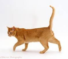 Image result for cat walking