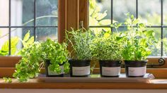 Indoor herb garden ideas are great for year long gardening. Are you in need of some ideas to get started? Then check this list out!
