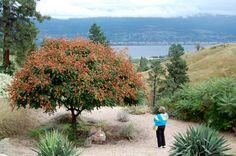 Desert garden and view of Okanagan Lake.