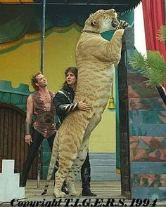 I do believe this is Hercules, the famous liger who lives in Florida.
