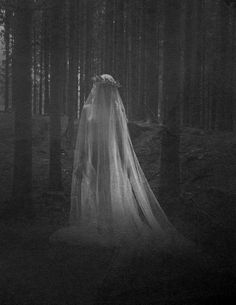 Veiled Beauty. An apparition deep in the woods.