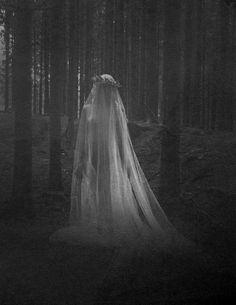 Veiled Beauty. An apparition deep in the woods.