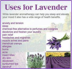 Lavender is my favourite oil. I never leave home without out. There are so many benefits with lavender essential oils. Here are some benefits for using lavender Lavender Uses, Lavender Benefits, Lavender Fields, Lavender Crafts, Lavender Recipes, Lavender Blue, Lavender Leaves, Raw For Beauty, Health And Beauty