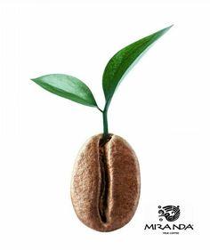 Asi inicia cada experiencia de sabor. / MIRANDA CAFE GOURMET