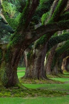 Oak Alley Plantation - Vacherie, Louisiana.   Went there twice with the kids, fond memories!