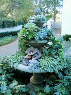 Bird bath succulents