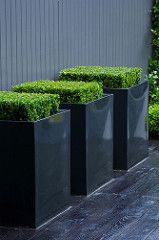 Jet black garden 1 Charlotte Rowe copyright Marianne Majerus is part of Black garden Planters - Black metal square planters with Buxus sempervirens)on black deck against grey painted fence Contemporary Planters, Modern Planters, Garden Planters, Metal Planters, Black Planters, Modern Landscaping, Garden Landscaping, Planter Box Designs, Planter Boxes