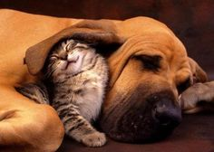 wonderful! I wish my cat and dog would do this! :)