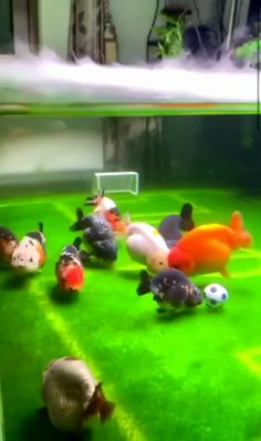 - This aquarium setup with stay soccer – youthful cutest so cute , animals , animal cuddles , animals funny , cute animals Cute Funny Animals, Cute Baby Animals, Funny Cute, Animals And Pets, Cute Animal Videos, Funny Animal Pictures, Cute Creatures, Animal Memes, Animals Beautiful