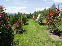 Photo of the garden 'Arboretum Borova hora - Rosarium' Garden Photos, Stepping Stones, Sidewalk, Outdoor Decor, Stair Risers, Side Walkway, Walkway, Walkways, Pavement