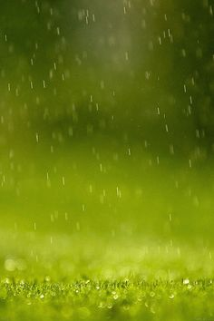 papers.co md37 wallpaper green rain nature 2 wallpaper photo wallpaper hd