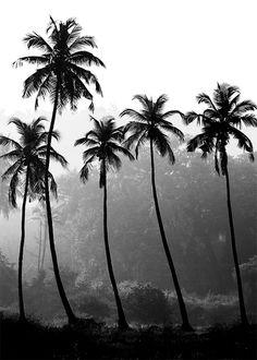 svartvita posters med palmer