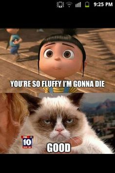 Hilarious Grumpy Cat ...For more humor pictures and hilariousness visit www.bestfunnyjokes4u.com/rofl-best-funny-joke-pic/