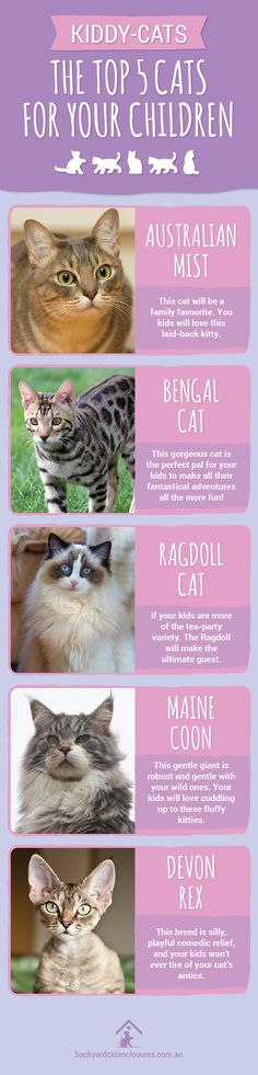 These are a great match for kids. They are energetic, affectionate and cute! Click the pin to learn more. Ragdoll Cat Breed, Devon Rex Cats, Maine Coon, Cat Breeds, Your Child, Kitty, Pets, Children, Animals Beautiful