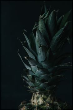 Pineapple | Moody fo