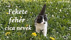 Fekete fehér cica nevek - Állatnevek Corgi, Animals, Animales, Animaux, Animal, Animais, Corgis