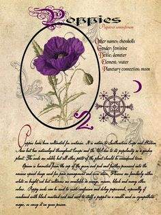 Grimoire, Spell, Herbs and Book of Shadows Pages, Practical Magic; The Cackling Cauldron ~ Book of Shadows: spell set 5 - Feng Shui - everyone needs luck on their side ; Magic Herbs, Herbal Magic, Wiccan, Magick, Grimoire Book, Witch Herbs, Green Witchcraft, Practical Magic, Kitchen Witch