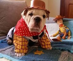 Toy Story una de las mejores películas de Disney , ¿Que diría Andy cuando se encuentre con este bulldog disfrazado de Woody ? Estoy segura que le encantaría la idea . #ToyStory #Disney #woody