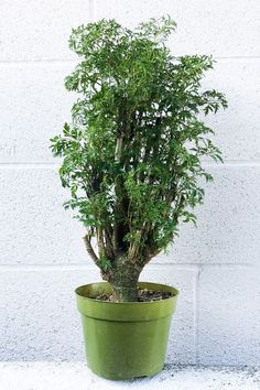 34 Low-Light Houseplants Even Beginner Plant Parents Can Keep Alive