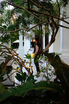 Thailand, Hua Hin, Devasom resort Plant Leaves, Thailand, Plants, Travel, Viajes, Destinations, Plant, Traveling, Trips
