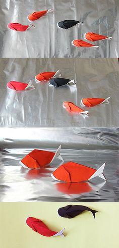 Carpe * Poisson * fish