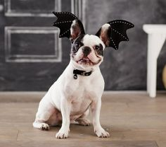 Bat Pet Costume | Pottery Barn Kids $9