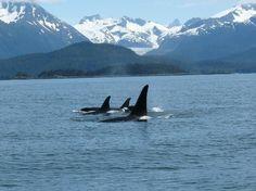 Alaska. It's another whole world