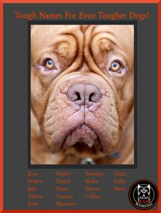 Looking for the perfect name for your big dog? Try these tips out to find a tough name for your dog! Big Dogs, Large Dogs, Xl Dog Beds, Wolfhound, Dog Stuff, Dog Breeds, Pitbulls, German, Tips