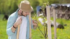 Povýsadbový rez ovocných drevín: Ako upraviť mladé stromčeky?