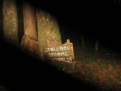 Aokigahara, Japan: The Suicide Forest