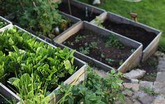 Här är några bilder från i somras. Jag fick överta ett badkar från grannen som renoverade, som jag grävde ned i vår sluttning -mellan pallkragar och stentrappor gjorda av överblivna stenar efter vår gamla skorsten.I framkant av badkaret flätade jag ett staket för att dölja den fula sidan. Plants, Image, Blog, Decor, Gardens, Vegetable Garden, Backyard Farming, Photo Illustration