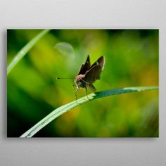 Moth by Jessica Hill Wall Art Prints, Canvas Prints, Moth, Canvas Art, Wall Decor, Posters, Fine Art, Animals, Wall Hanging Decor