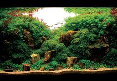 Google Image Result for http://www.gadgetking.com/wp-content/uploads/2008/02/nature-aquarium-1.jpg